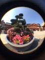スマホ対応の魚眼カメラレンズアダプタが上海問屋から!