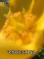 魚眼・ワイド・マクロレンズ搭載のスマホ用3in1レンズが上海問屋から!