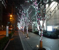 マーチエキュート神田万世橋、11月22日から冬季限定イルミネーションを点灯! 3原色×遺構階段や冬の江戸彼岸桜