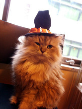 猫カフェ「cat cafe nyanny(ニャニー)秋葉原店」、10月30日/31日にハロウィン仮装イベントを開催