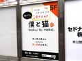 猫カフェ「僕と猫。秋葉原店」が6月20日(月)オープン! リバティー秋葉原4号店のビル5F